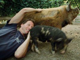 Original Play, Armin spielt mit Schweinen, 2015