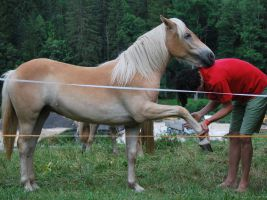 Original Play mit einem Pferd