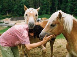Original Play mit Pferden
